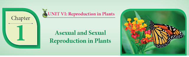 KALVISOLAI ONLINE TEST 85 - CLASS 12 BIOLOGY BOTANY - CHAPTER 1 ASEXUAL AND SEXUAL REPRODUCTION IN PLANTS - 1 MARK QUESTIONS - ONLINE TEST