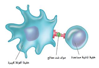 حل أسئلة الفصل التاسع – جهاز المناعة.