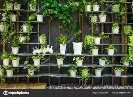 सजावटी पौधों की ऑनलाइन वेबसाइट