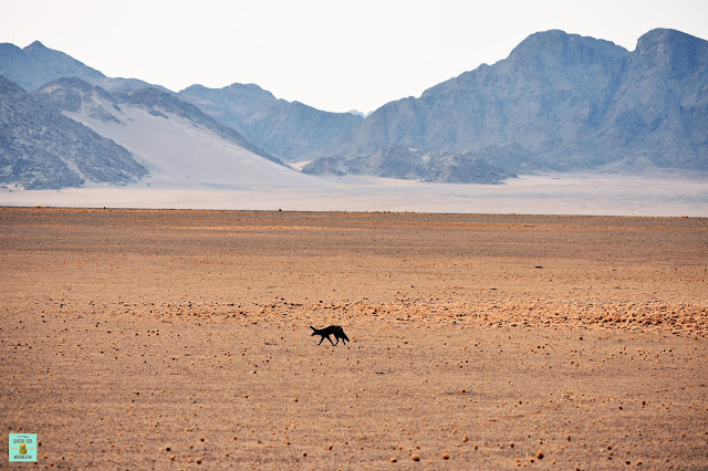 Namib-Naukluft National Park (Namibia)
