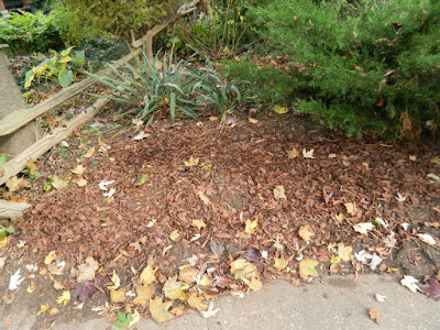 The Annex Front Garden Fall Cleanup after by Paul Jung Toronto Gardening Services