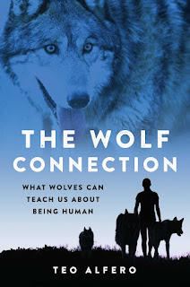 thoughts on The Wolf Connection by Teo Alfero