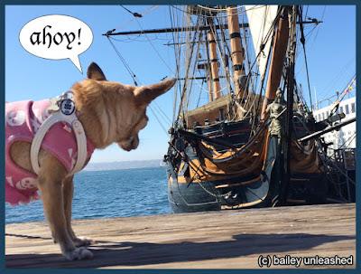 ahoy mateys! via baileyunleashed.com