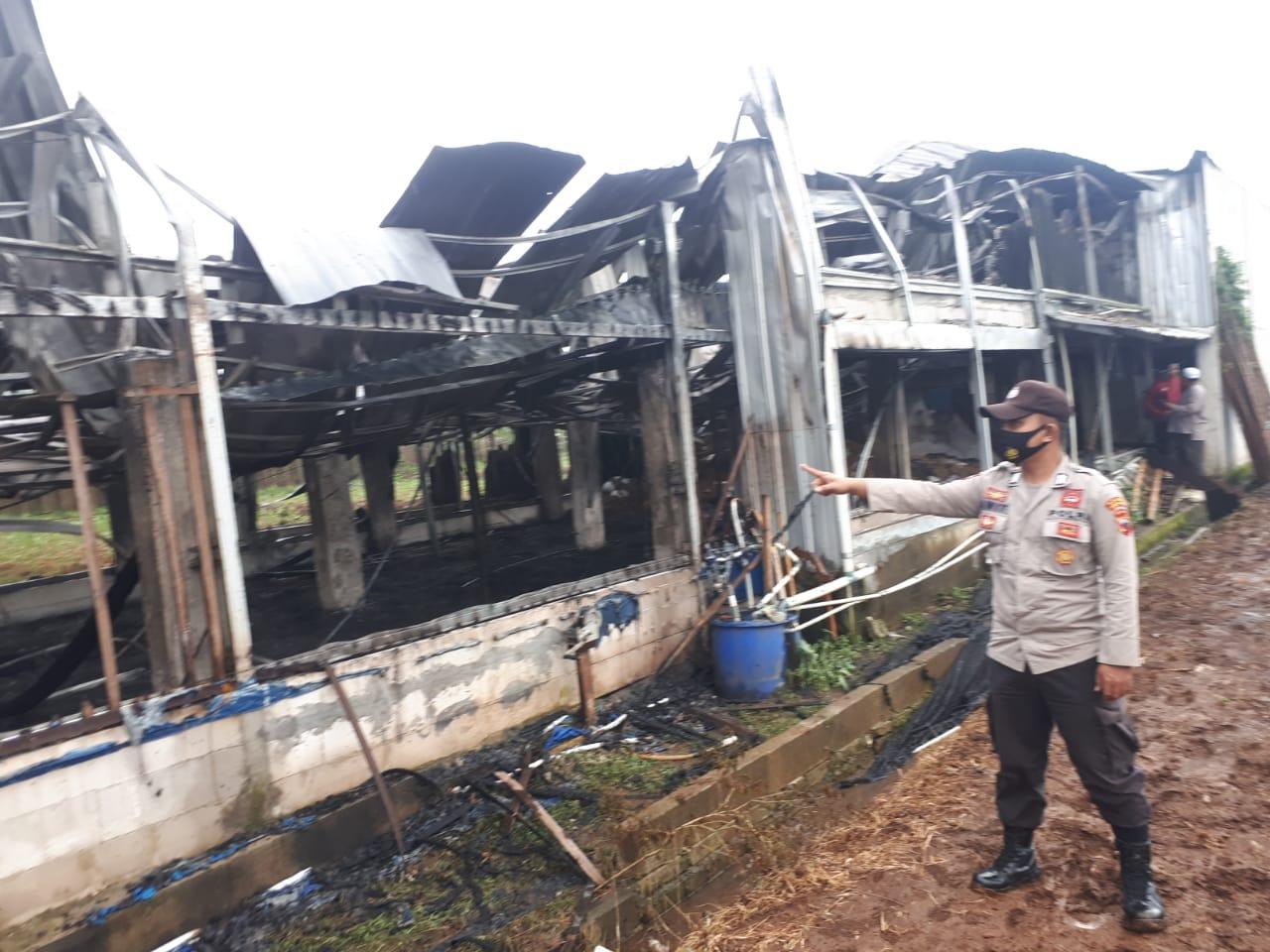 Kandang Terbakar di Kejobong, Belasan Ribu Ayam Ikut Terpanggang