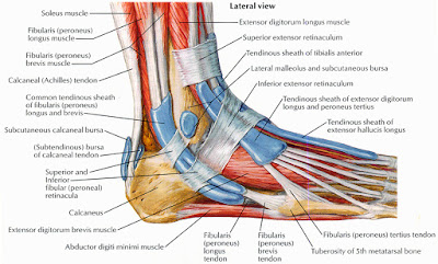 Fibromyalgia and feet muscles