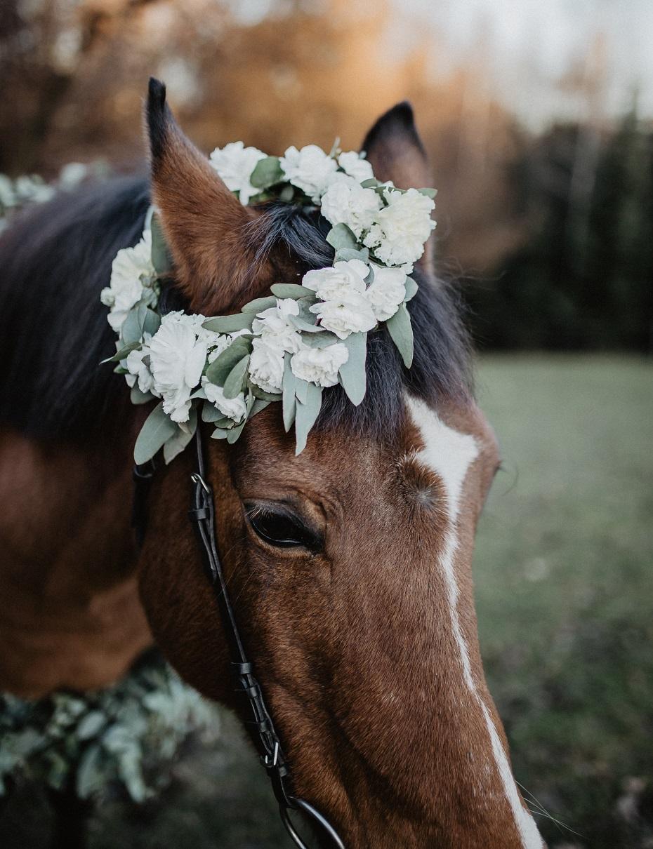 Sesja narzeczeńska z koniem