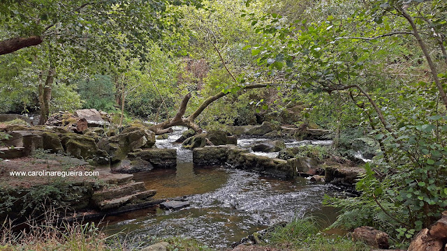 5 paseos por la naturaleza para este otoño verdes
