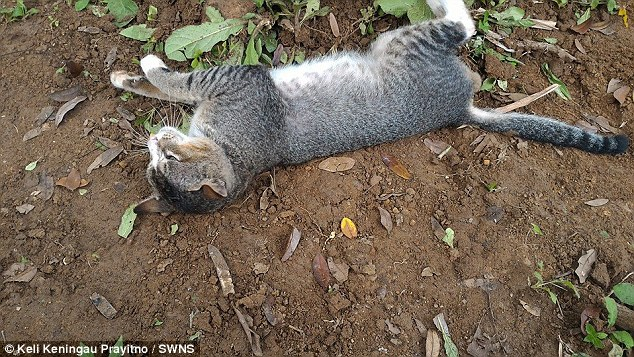 Heartbroken Cat Spends 1 Year By Her Dead Owner's Grave