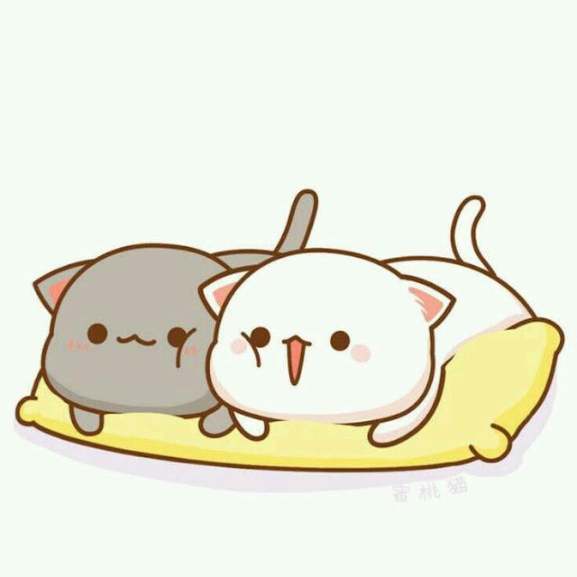avatar mèo đôi