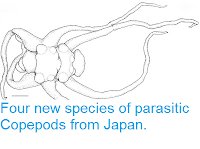 http://sciencythoughts.blogspot.co.uk/2013/04/four-new-species-of-parasitic-copepods.html