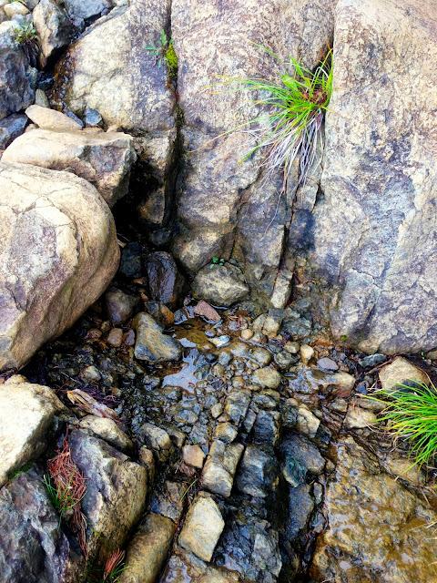 霧雨に濡れた蛇紋岩