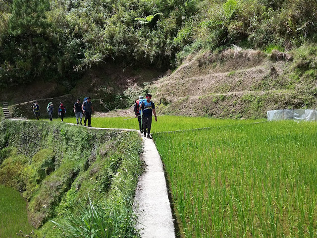 The team trekking in the edges of rice terraces