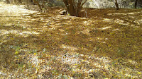 Осень в поселке Винный Астраханская область