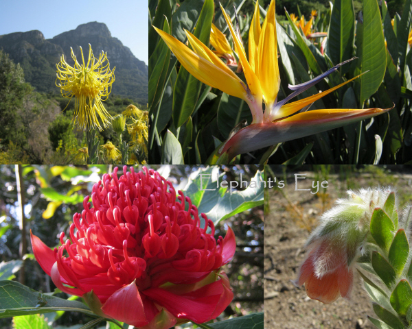 August flowers at Kirstenbosch