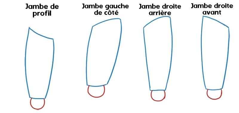 dessiner le genou