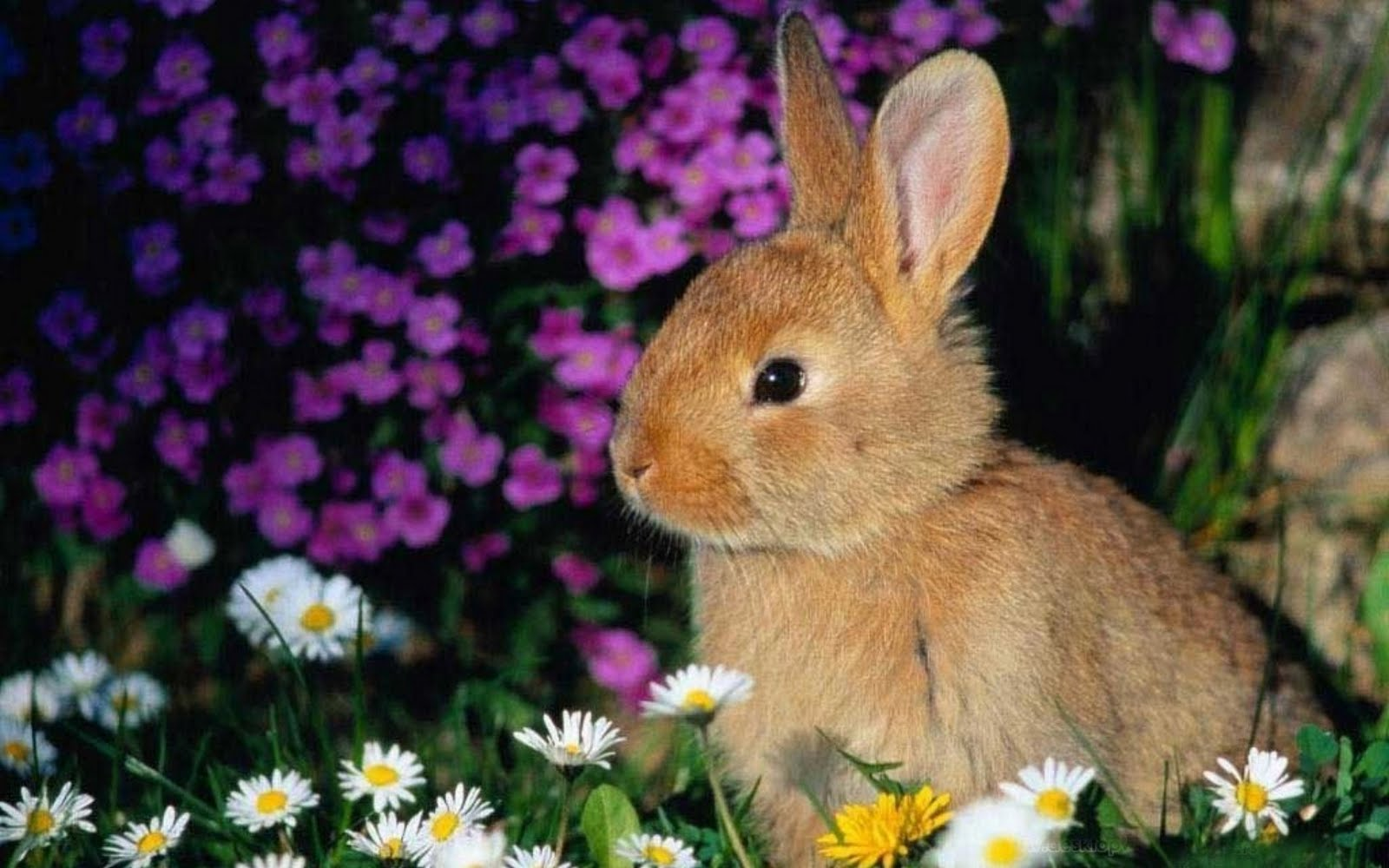 Very Sweet And Cute Animals Rabbit Wallpapers HD
