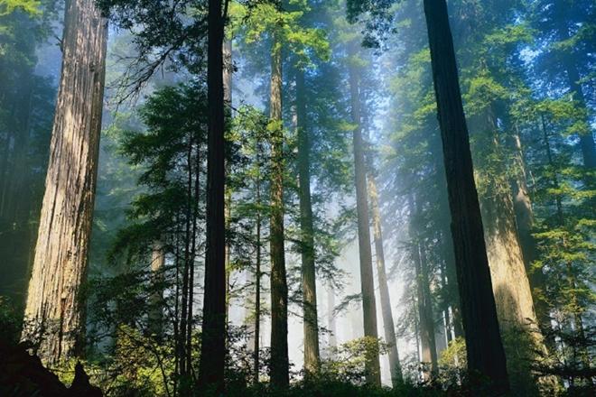 5 Daerah Indonesia Dengan Hutan Tropis Terluas Di Dunia