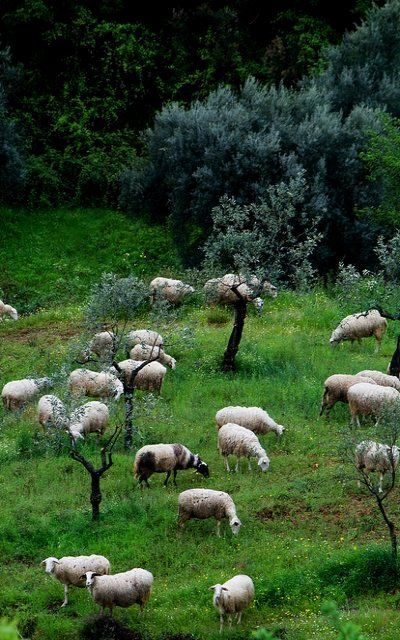 Pastoral Arcadia Greece