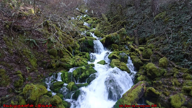 Falls Creek Trail Washington