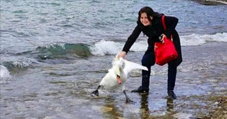 Ce cygne est mort après que cette femme l'a traîné hors de l'eau pour un selfie!