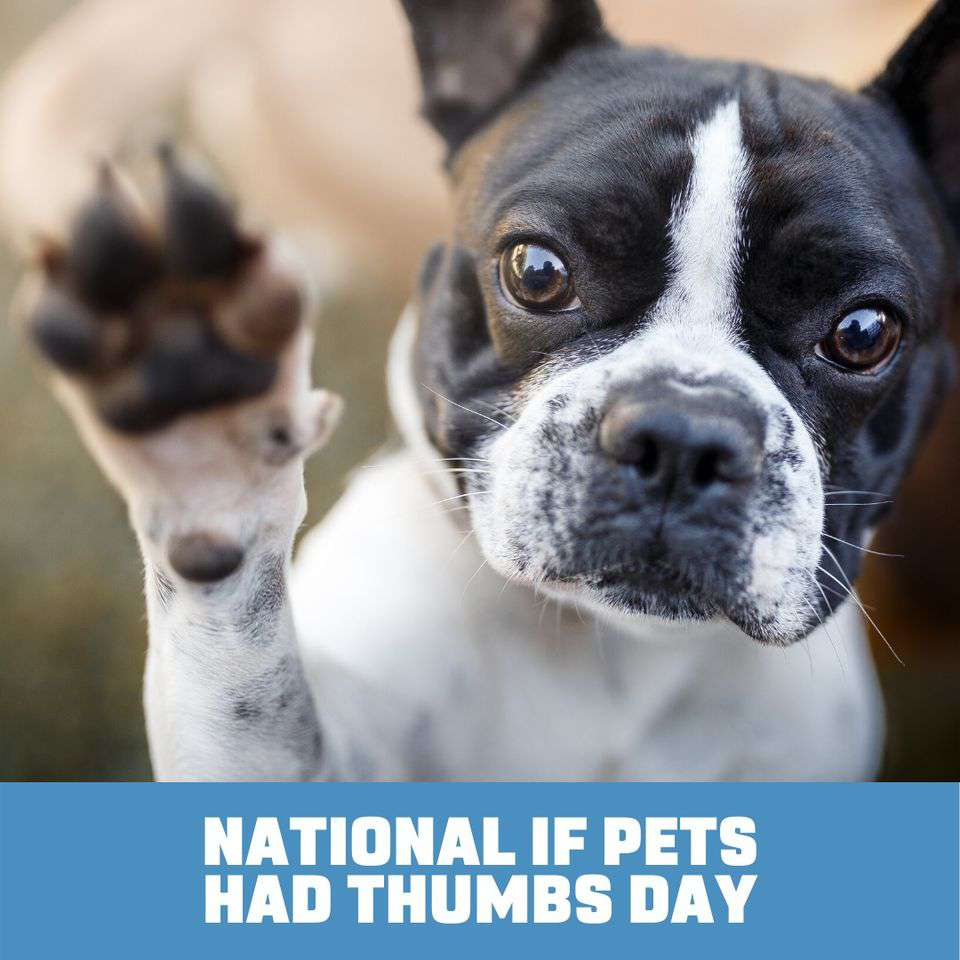 National If Pets Had Thumbs Day Wishes for Whatsapp