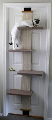 smart cat climber