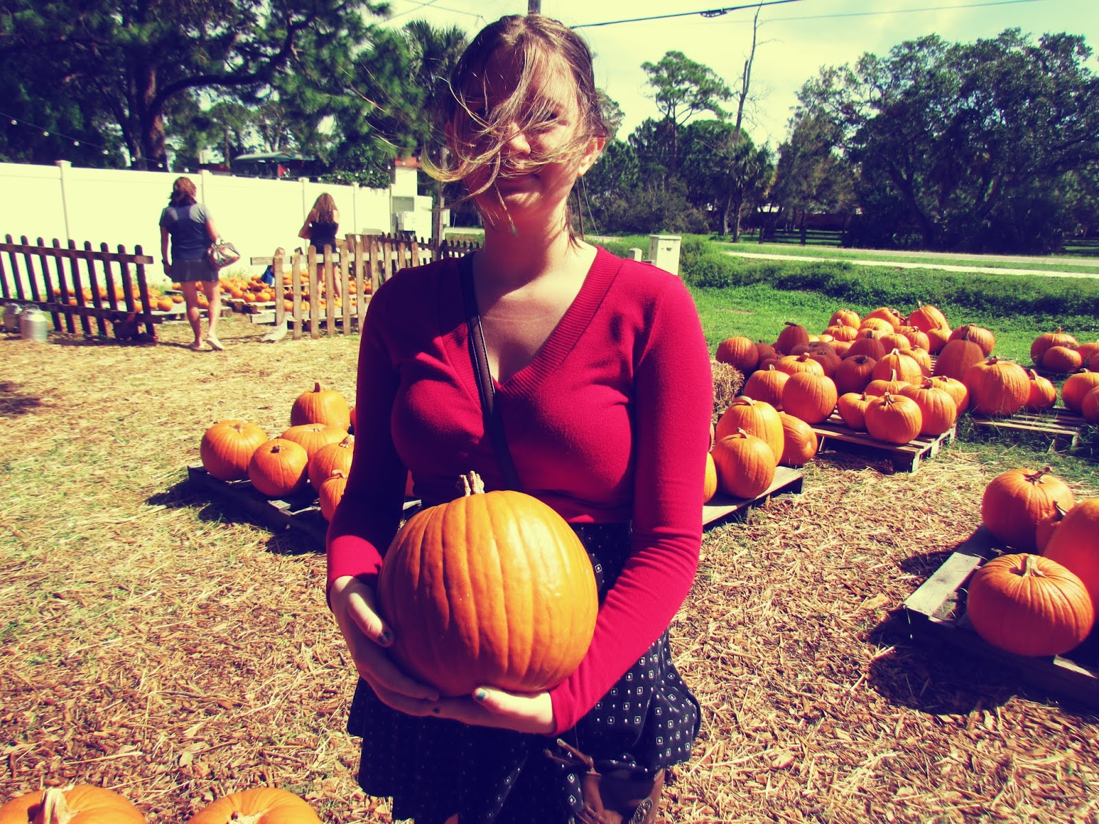 A young girl wearing lucky red sweater gathering pumpkins at a pumpkin patch ready for the fal seasonal shift