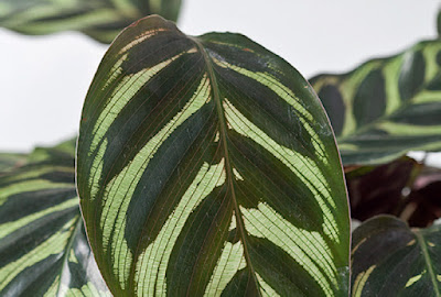 As plantas necessitam realizar a fotossíntese para viver.