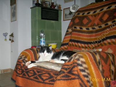 o pisica relaxata in fotoliu