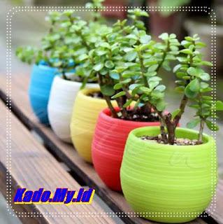 Pot Bunga Cantik Warna