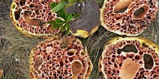 Tanaman Herbal Untuk Kanker Serviks, Mempercepat Penyembuhan