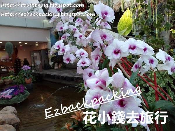 香港公園打卡親子好去處:紫羅蘭展覽