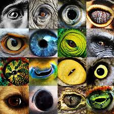 An assortment of animal eyes.