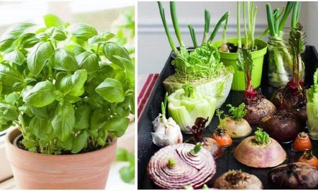 12 plantas que siempre puedes volver a cultivar a partir de restos de cocina