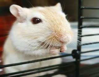 सपने में चूहा देखना | sapne mein chuha dekhna