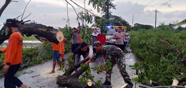 Babinsa Karangdowo  Bantu Evakuasi Pohon Tumbang Bersama warga