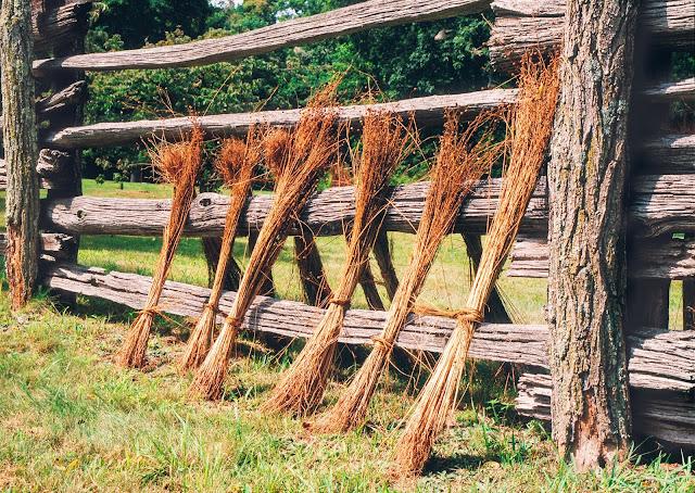 Flax Drying, Blue Ridge Mountains, North Carolina USA - photo by Tim Ravenscroft, Wyndlestraw Designs