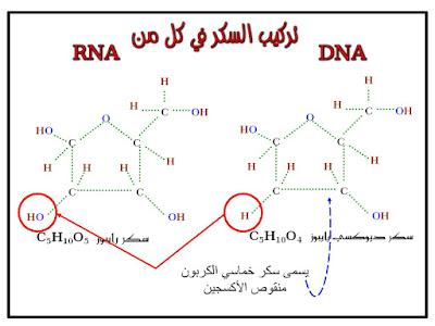شرح رائع درس مادة الوراثة الثالث المتوسط الفصل الثاني  2021