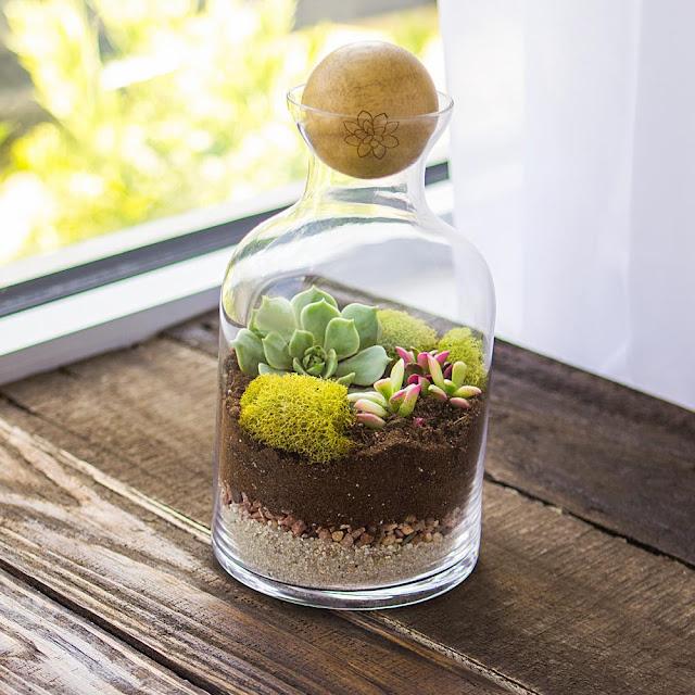 จัดสวนในขวดแก้ว