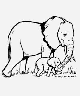 Gambar Sketsa Mewarnai Gajah Sebagai Media Belajar Anak 20167