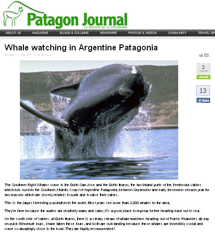 Whale watching in Argentine Patagonia