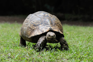 Live Turtle and Tortoise Museum