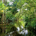 Ini Hutan Amazon...