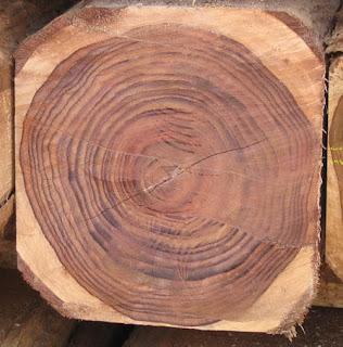 karakteristik kayu sonokeling