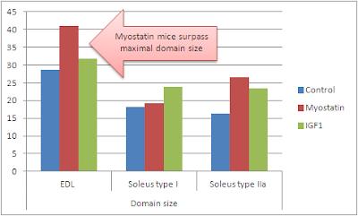 surexpression-IGF1-engendre-des-muscles-massifs-faibles-et-dysfonctionnels