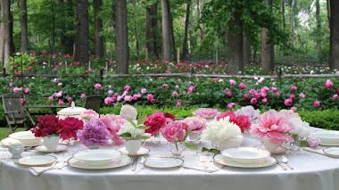Peony's Envy en Nueva Jersey, el jardín de peonías abierto al público más grande del mundo