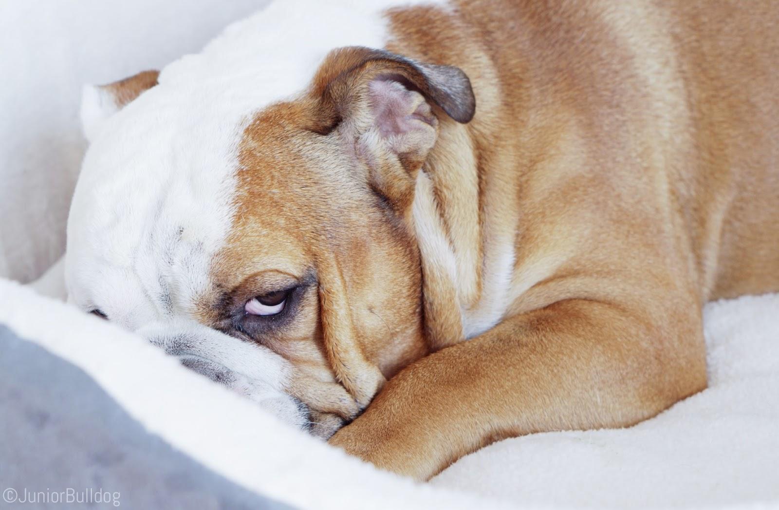 Panier corbeille cocoon Zolux chien