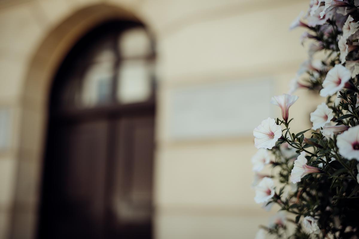 kwiaty w lublinie, lublin