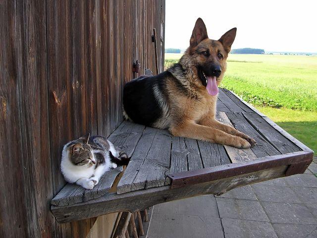 pies, kot, Majka, Bazyl, odpoczynek, zwierzęta