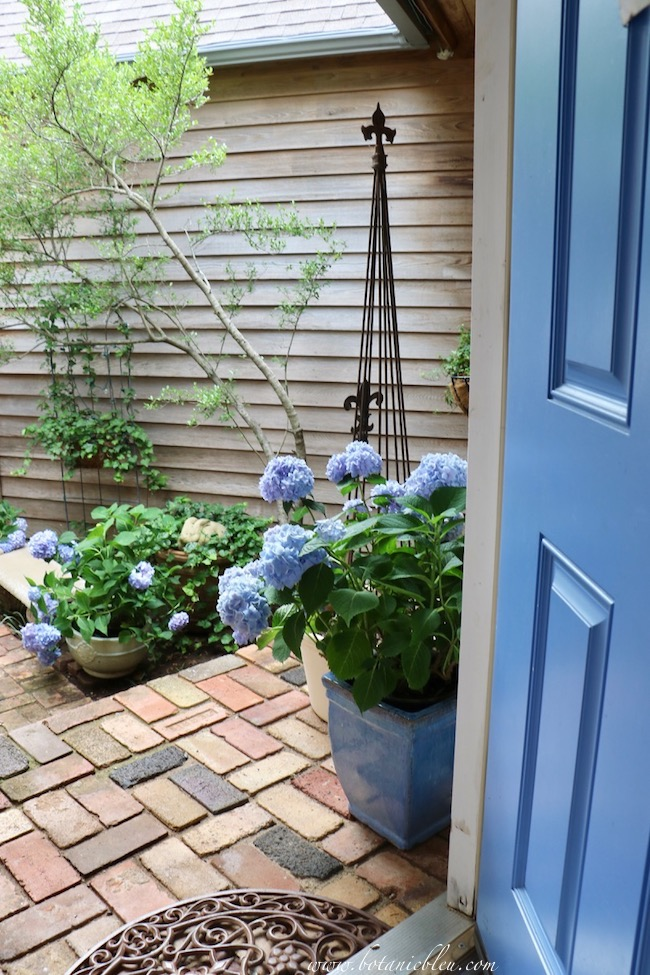 Summer Courtyard Blue Hydrangeas go with blue front door
